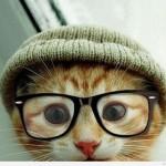 chat-bonnet-lunettes